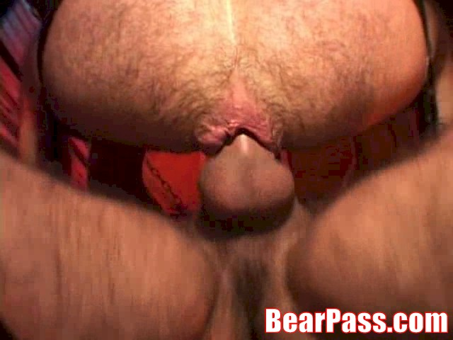 Hot Bear In Action